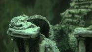 Time lapse Black Mystery Snail Stock Footage