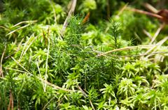 green moss with drops of dew on it - stock photo