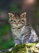 Sad wild kitty Stock Photos