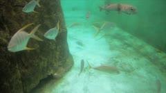 Underwater World Fishes Stock Footage