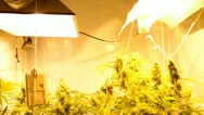 Stock Video Footage of Indoor Marihuana Hydroponic system
