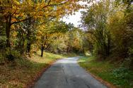 Road in the autumn with yellow trees Stock Photos