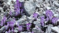 Orchids in gravel zoom in Stock Footage
