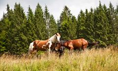 Horses on the summer field Stock Photos