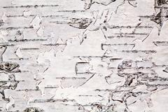 birch bark close view - stock photo