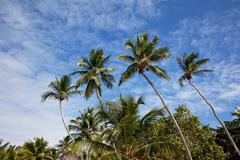 four palms on saona island - stock photo