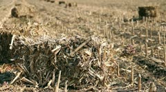 Straw Bales on a Maize Field Stock Footage