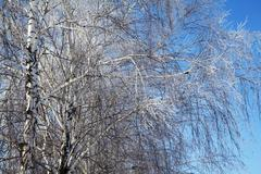 beautiful winter trees - stock photo