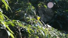 Sunny spiderwebs. Stock Footage