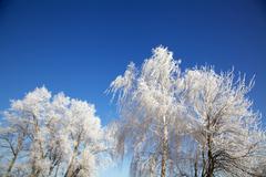 Stock Photo of winter trees