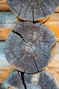 Woodpile in section Stock Photos