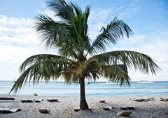 saona island beach 4 - stock photo