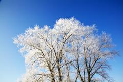 winter trees full of snow - stock photo