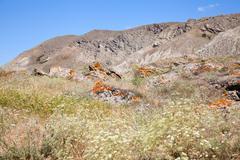 Kara dag mountain top Stock Photos