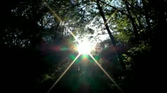 The summer cheerful sun shone through foliage of trees Stock Footage