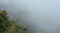 Stock Video Footage of Foggy Hillside 6
