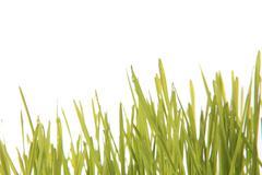 Green grass on the white background Stock Photos
