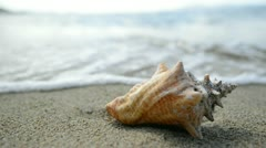 Sea conch shell on the beach in the Caribbean Stock Footage