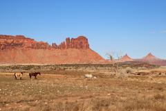 southwest pasture - stock photo