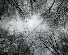 looking up at bare tree branches - stock photo