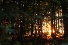 Golden woods - stock photo