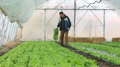 Farmer working in the greenhouse - stock footage