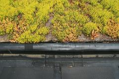 partial green roof detail - stock photo