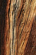 weathered pine wood - stock photo