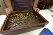 Stock Photo of coffee harvest in brazil - grading - quality inspection at buyer's laboratory