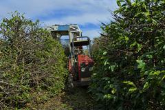 mechanized coffee harvestor - stock photo