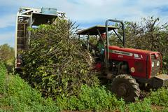 Stripping harvester detail at moment machine passes over tree Stock Photos