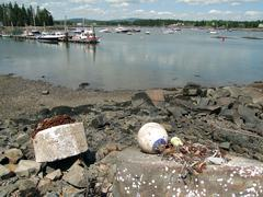 Low tide exposes anchors and buoys Stock Photos