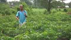 Asian Farmer Spraying His Cassava Crop-close up Stock Footage