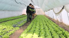 Farmers working in the greenhouse Stock Footage
