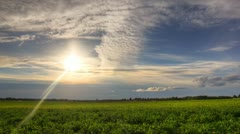 Sunset on a field Stock Footage