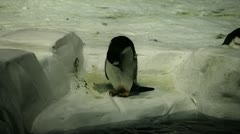 Penguin Hops Up Stock Footage