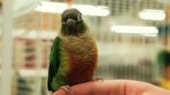 Parakeet on Finger Stock Footage
