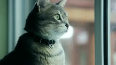 Cat Sees Something Stock Footage