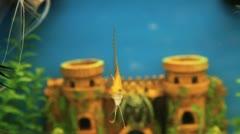 Fish Tank 1 Stock Footage