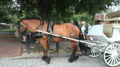 Horse & Carriage Stock Footage