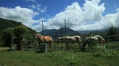 Three Horses Stock Footage