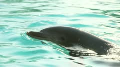 Dolphin Swimming Stock Footage