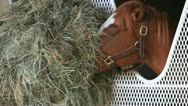 Horse Eating Hay 2 Stock Footage