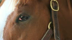 Horse's Eye Stock Footage