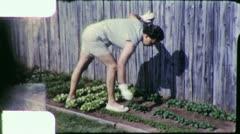 PULLING WEEDS VEGETABLE GARDEN 1960 (Vintage Film Home Movie Amateur) 4890 Stock Footage