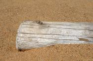 Stock Photo of Dry tree trunk in sand