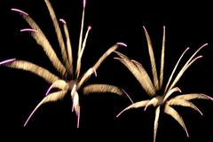 Fireworks reminding flowers Stock Photos