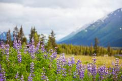Alaskan landscapes Stock Photos