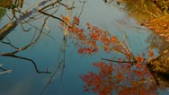 Leaves of autumn. Stock Footage