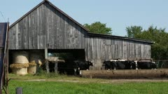 Cows in front of Barn on Farm Stock Footage